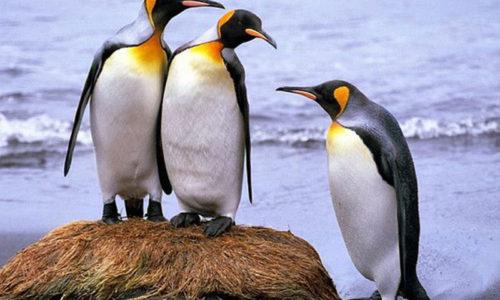 """Học """"chim cánh cụt"""" cách thảo luận nhóm hiệu quả"""