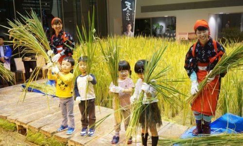 Công ty cho nhân viên trồng lúa tại văn phòng